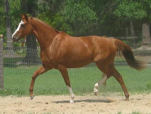 プラセンタの種類 馬